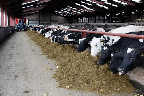 For optimum conversion molasses blends can be included in the diet at up to 10-15% of the total ration dry matter.